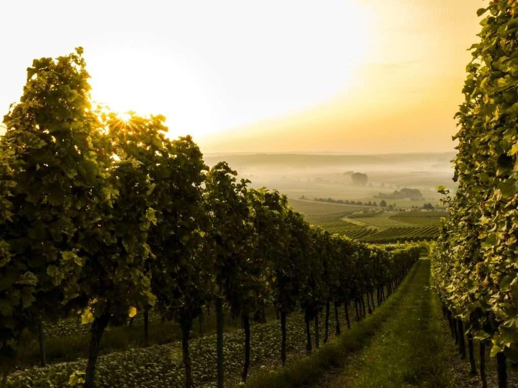 exportaciones de Francia vinos